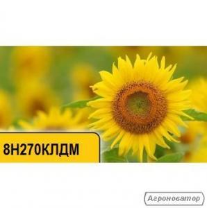 Семена подсолнечника 8H270КЛДМ