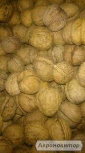 продам орех от населения