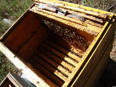 Продажа пчелы