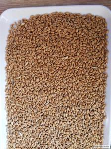 Пшениця вищого класу