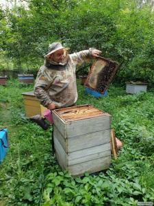 продам 30-50 бджолопакетів, Карпатка, початок травня, ціна договірна