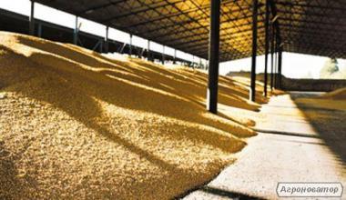 Услуги по сушке  зерновых, масличных культур
