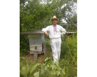 Бджолосім'ї,рої, бджолопакети