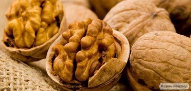 Продам цілий грецький горіх зібраний у західній Україні