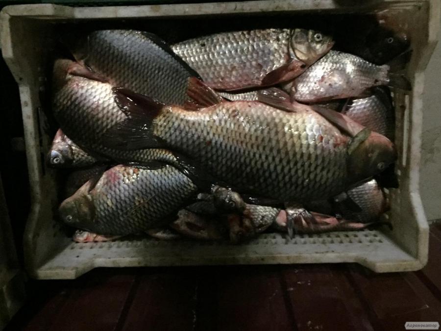 Продам рыбу свежемороженную. Мелкий, средний и крупный ОПТ