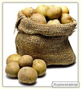 Картопля товарний