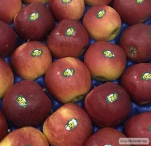 Сад продає яблука з холодильника