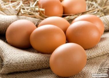 Яйця інкубаційні 100%відповідність породам!