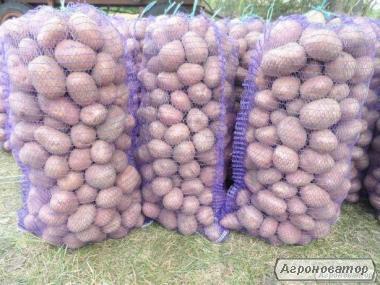 Продам вкусную, экологически чистую картошку.