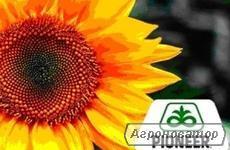 Гібрид соняшнику Піонер P64HE118