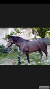 конь лошадь жеребец