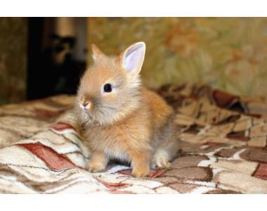 Продам декоративного кролика!