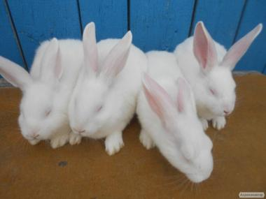 продам кроликів білого панона є різного віку та ваги