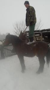 продам коня,упрояж,віз,гребка