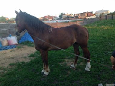 Продам лошадей тяжеловозов