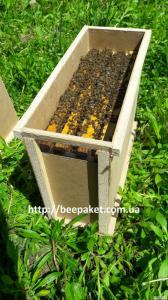 Пчелопакеты ,Пчелосемьи, Карпатка 2020 с Доставкой Днепр,Полтава