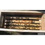 Продам бджолопакети. Доставка по Україні