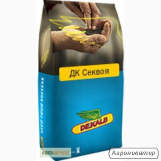 Семена рапса озимого Монсанто гибрид ДК Секвоя, г. Киев