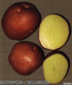 Продам семенной картофель II-й репродукции
