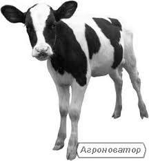 телята  бычки -телочки