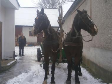 продаєся пара лошадей