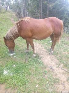 Продається кінь