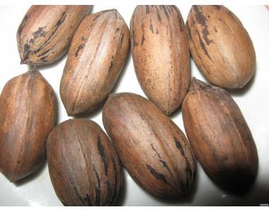 Саженцы и семена   Американского ореха Кария Пекан. ( 8 СОРТОВ )