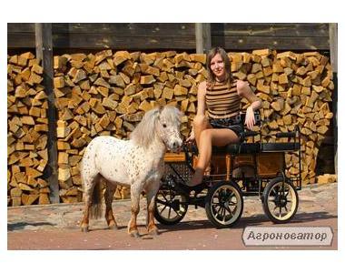візок для поні+ поні на вибір за доплату