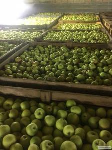 Яблука оптом 6,6.5, 7+