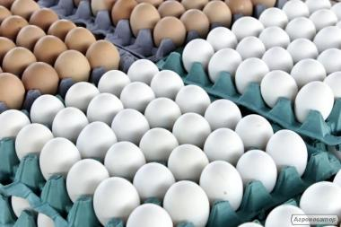 Fresh hen eggs C0, C1, C2 Export / Яйце куряче свіже на Експорт!