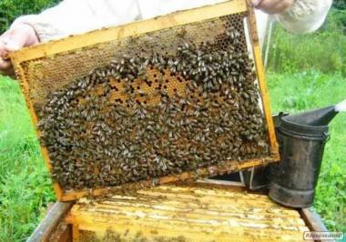 Продам пчелинные семьи