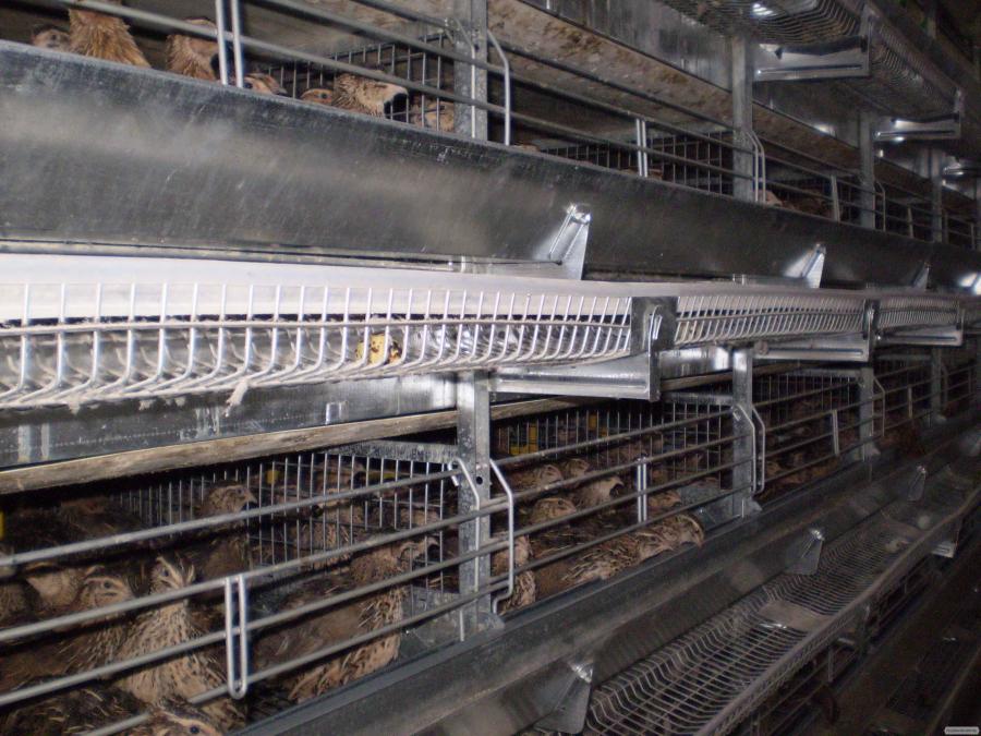 Клеточное оборудование для содержания перепелов-несушек ОКП