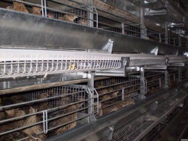 Кліткове обладнання для утримання перепілок-несучок ОКП