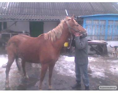 Продам коня !! дуже сильний