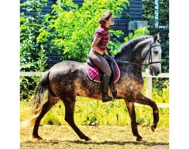 Продажа красивого коня! Андалузского Андалуз Киев