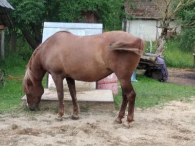 Продам два коня