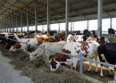 Здания животноводческих  фермы (коровники, свинарники)