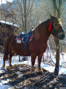 Продам лошадь тяжеловоза