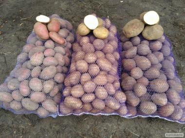 Продам товарный картофель хорошего качества - 40 тонн. Срочно!