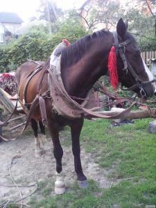 продаєтся кінь 7 років