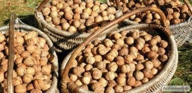 орехи грецкие урожай 2018года  недорого