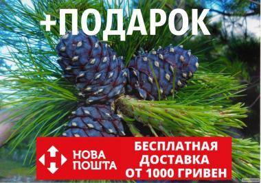 Кедр европейский семена 20 шт (сосна кедровая) для саженцев