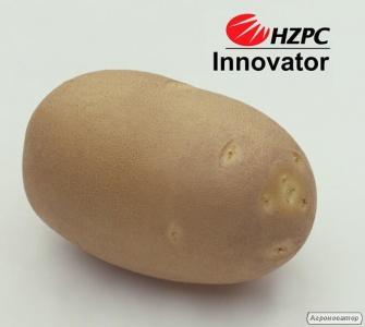 Насіннєва картопля Інноватор