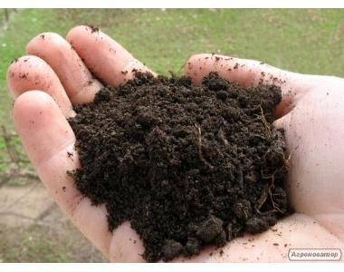 Навоз  КРС с доставкой органическое  удобрение