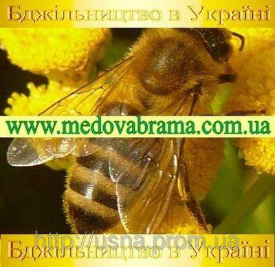 Пчеловодство в Украине