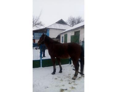 Продаж коня