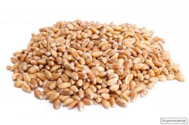 Реалізуємо пшеницю 3кл