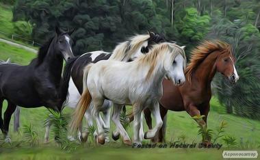 Лікування коней, оформлення паспортів на коней.