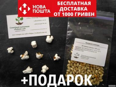 Попкорн насіння (близько 100 шт) повітряна кукурудза на посадку