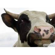 сыворотка сухая молочная купить в Украине